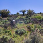 East Canyon State Park Birding