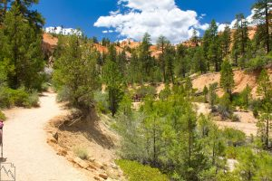 Bryce Canyon Mossy Cave Trail