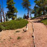 Bryce Canyon Bristle Cone Loop